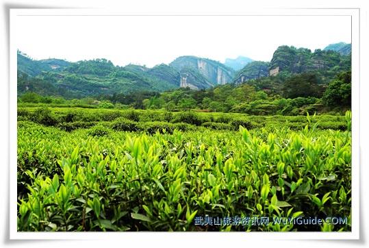 千赢国际下载app茶山